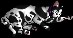 Snookthorn.kittypet