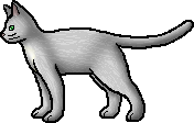 Needletail.rogue
