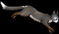Wing.ph