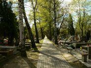 Cmentarz brodnowski5