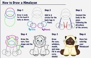 How to Draw a Himalayan Cat