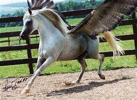 Datei:Horse.jpg