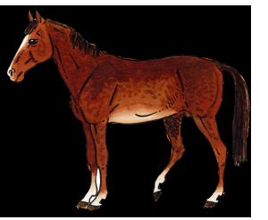 Datei:Pferd2.png