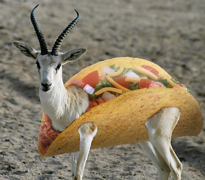 Taco gazelle wielder wiki fandom powered by wikia
