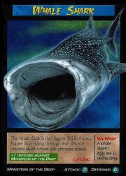 whale shark wierd nwild creatures wiki fandom powered