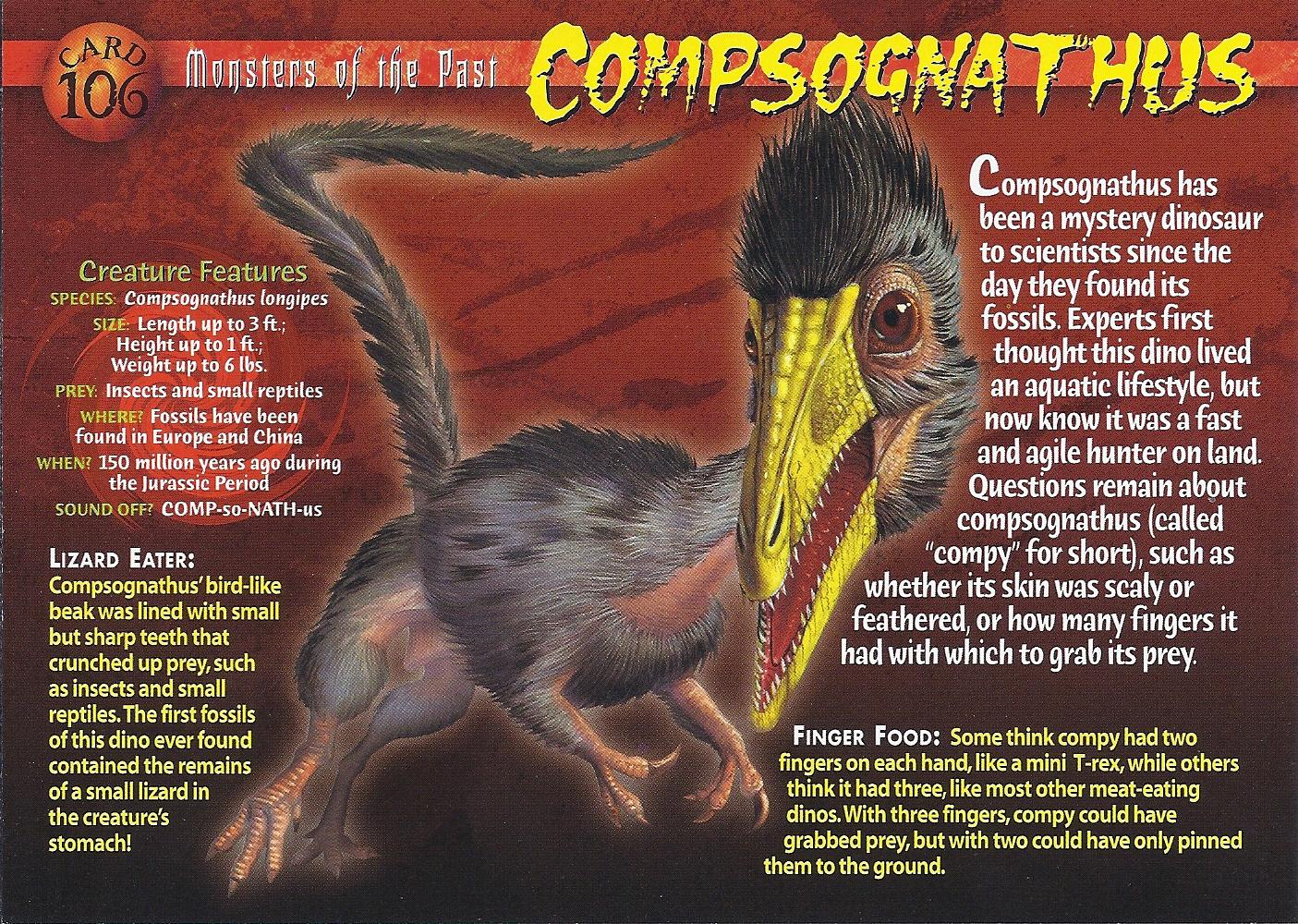 http://vignette3.wikia.nocookie.net/wierdnwildcreatures/images/4/45/Compsognathus_front.jpg/revision/latest?cb=20130828020914