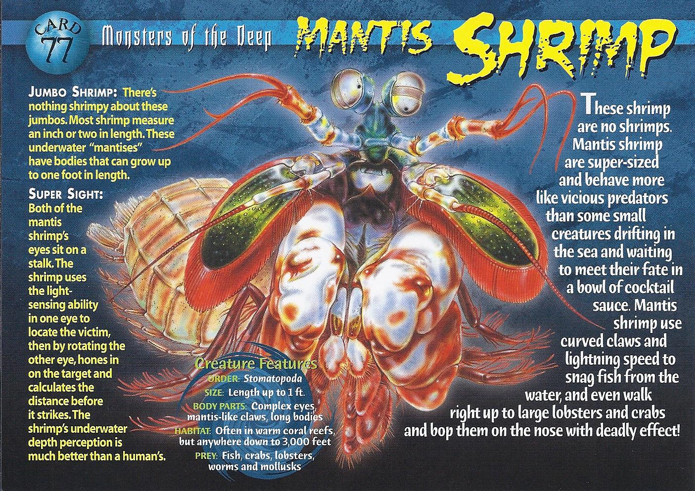Mantis Shrimp Wierd N Wild Creatures Wiki Fandom
