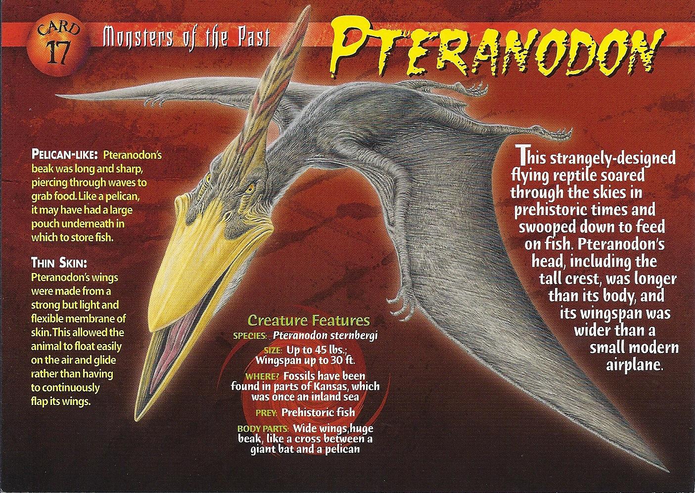 pteranodon wierd nwild creatures wiki fandom powered