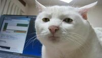 Seriouscat