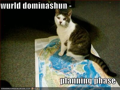 Funny-pictures-your-cat-plans-world-domination