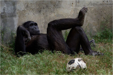 ChimpSoccerBall