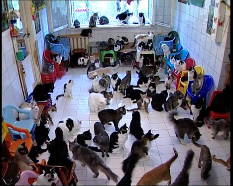 130cats