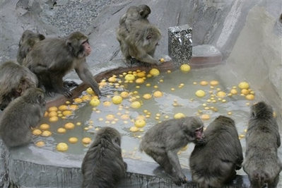 File:JapaneseMonkeyBath.jpg