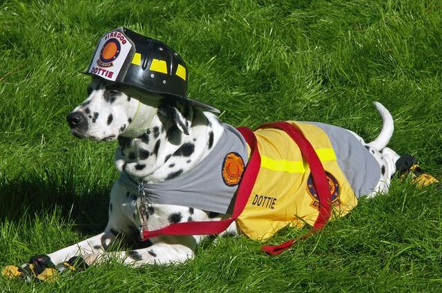 File:Dottie the firedog.JPG