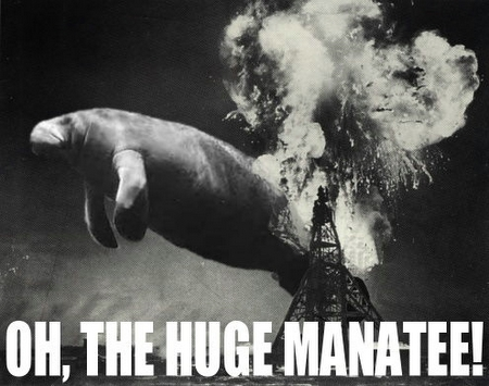 File:Huge manatee.jpg