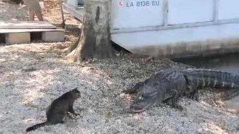 Pet Cat Saves Boy from Two Vicious GATORS