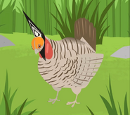 Prairie Chicken.jpeg