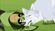 Wolf and Chris