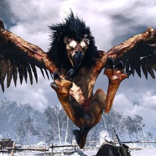 Griffin creature witcher wiki fandom powered by wikia - A picture of a griffin the creature ...
