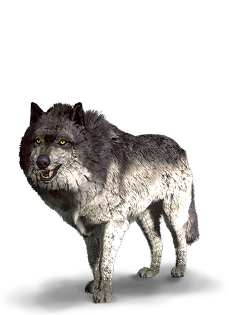File:Tw3 journal wolf.png