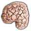 File:Substances Drowners brain.png