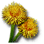 File:Tw3 blowball.png