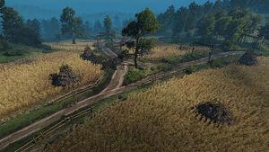 Tw3 wheat fields