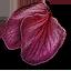 File:Tw3 ginatia petals.png
