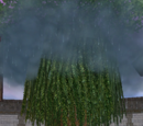 Torrence, the Storm Tree