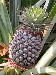 File:Pineapple.jpg
