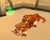 TigerNC