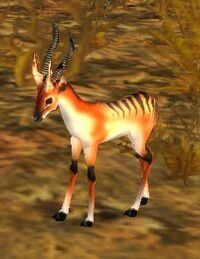 Gazelle Fawn