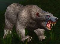 Gray Bear