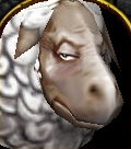 Sheep face