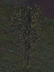 Fissure Plant