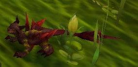 Image of Spiky Lizard
