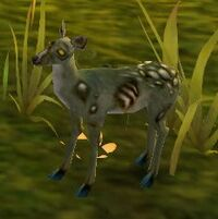 Infected Fawn