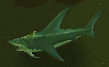 Coral Shark