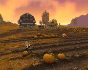 Furlbrow's Pumpkin Patch