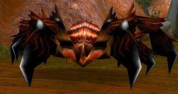 Greater Tarantula