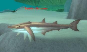 Barbfin Skimmer