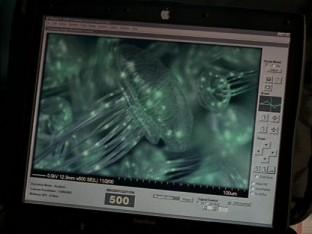 File:Medusas.jpg