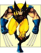 Wolverine today