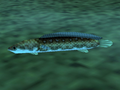 Hylian Loach (Ocarina of Time).png
