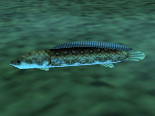 File:Hylian Loach (Ocarina of Time).png