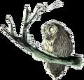 Owl Artwork 5 (Link's Awakening).png