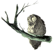 Owl Artwork 5 (Link's Awakening)