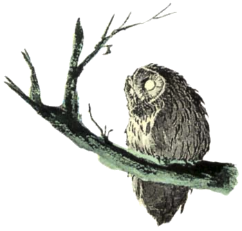 File:Owl Artwork 5 (Link's Awakening).png