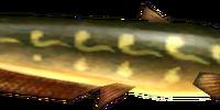 Ordon Catfish