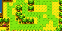Forest of Time (Oracle of Ages)